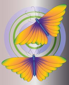 Free Wing Orange Butterfly Royalty Free Stock Photos - 15743868