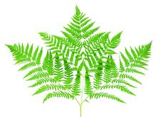 Free Young Green Fern Leaf Stock Photography - 15744482