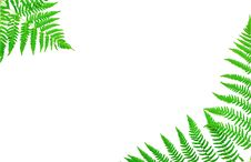 Free Young Green Fern Leaf Stock Photo - 15744550