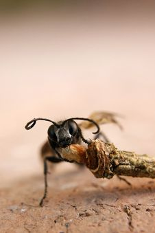 Free Ant Stock Photography - 15744722