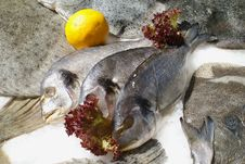 Chilled Fish Royalty Free Stock Photo