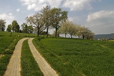 Footpath With Cherry Trees In Hagen, Germany Royalty Free Stock Image