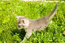 Free Little Kitten Stock Images - 15746414