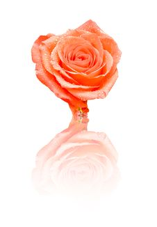 Free Red Rose Stock Photo - 15746440