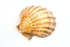Free Perfect Seashell Stock Photography - 15748022