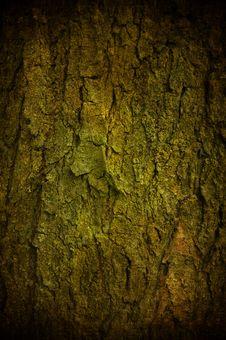 Free Grunge Bark Stock Image - 15748791
