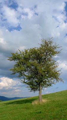 Free Tree On A Meadow Stock Photography - 15748812