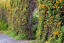 Free Arbor Hedge Stock Photography - 15749022