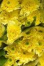 Free Yellow Flower Royalty Free Stock Photo - 15752385