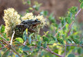 Free Frog Hiding In A Flower Stock Photography - 15753792