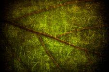 Free Grunge Leaf Stock Photography - 15750402