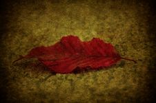 Free Grunge Leaf Royalty Free Stock Photography - 15750557