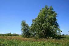 Free The Tree Stock Photos - 15750943