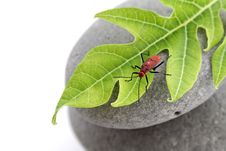Free Insect On Leaf Stock Images - 15751044