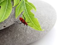 Free Insect On Leaf Stock Images - 15751054