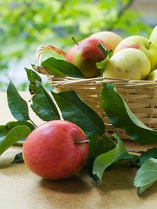 Free Apples Stock Photo - 15751670
