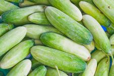 Free Cucumbers Stock Photography - 15752362