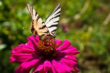 Free Butterfly Stock Photo - 15752780