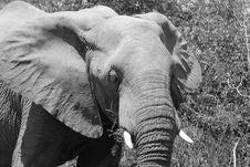 Free Elephant Stock Photo - 15752880