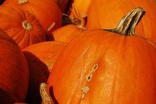 Free Pumpkins Royalty Free Stock Photos - 15753748