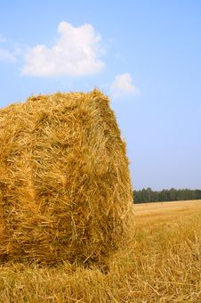Meadow Of Hay Bales Stock Image