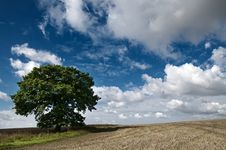 Free Tree In A Field Stock Images - 15754184
