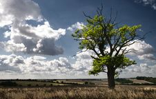 Free Tree In A Field Royalty Free Stock Photography - 15754217