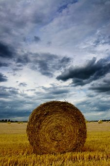Free Rolled Up Wheat Royalty Free Stock Photo - 15754295