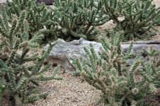 Free Desert Plants Royalty Free Stock Images - 15754949