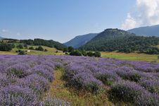 Free Lavender Landscape Royalty Free Stock Image - 15755916