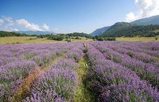 Free Lavender Landscape Royalty Free Stock Images - 15756029