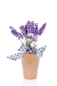 Free Purple Lavender In A Vase Stock Photos - 15756073