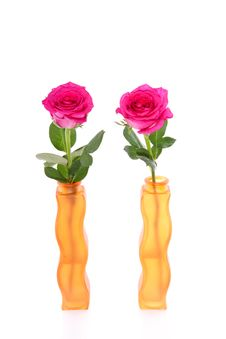 Free Two Pink Roses Stock Photo - 15756080