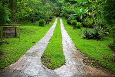 Road In Deep Forest Stock Photos