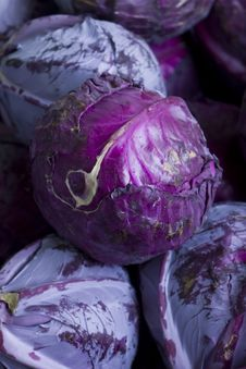 Cabbage Pile Stock Images