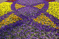 Free Viola-Hybrids In Spring Stock Images - 15762864