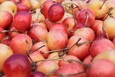 Free Basket Of Cherries Royalty Free Stock Images - 15760569