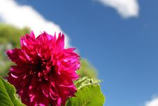 Free Red Flower In The Blue Sky Stock Image - 15761201