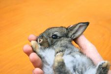 Free Young Rabbit Royalty Free Stock Photo - 15766165