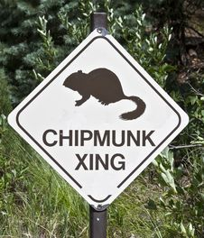 Free Chipmunk Crossing Royalty Free Stock Photos - 15766258