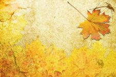 Free Red Autumn Sheet Royalty Free Stock Photography - 15768347