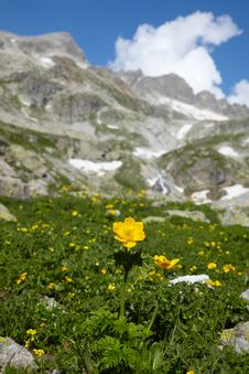 Yellow Flower In A High Mountains Stock Photo