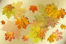 Free Red Autumn Sheet Royalty Free Stock Photos - 15768378
