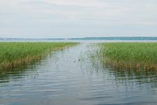 Free Lake With Cane Stock Photography - 15769582