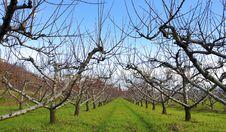 Free Winter Landscape In Tuscany Italy- Toscana Royalty Free Stock Image - 15769716