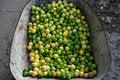 Free Basket Lemons Stock Images - 15775694