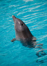 Free Dolphin Swimming In Water Royalty Free Stock Image - 15777546