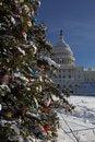 Free The Capital Christmas Tree Royalty Free Stock Photo - 15777785