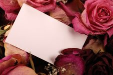 Card With Dried Roses Royalty Free Stock Images