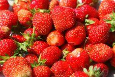 Free Strawberries Stock Photo - 15774440
